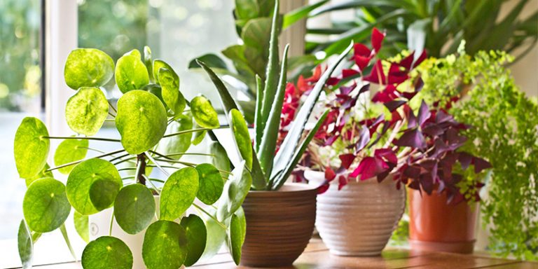 10 Vastu Plants for Home to Bring in Positive Energy, Wealth and More